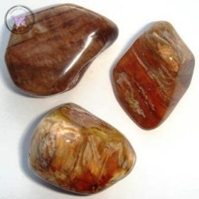 Petrified Wood Tumble Stone